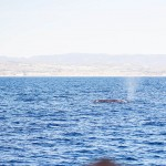 Dana Wharf Sportfishing Whale Watching