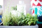 Easy Backyard Herbs