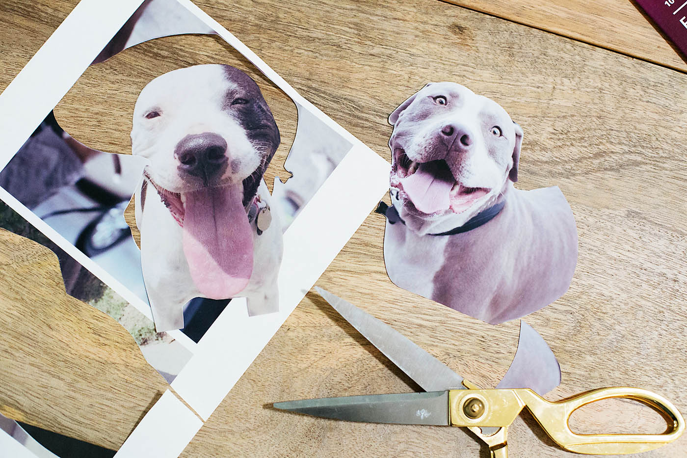 DIY personalized photo dog food jar - allforthememories.com