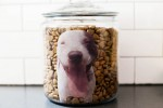 DIY Personalized Photo Dog Food Jar