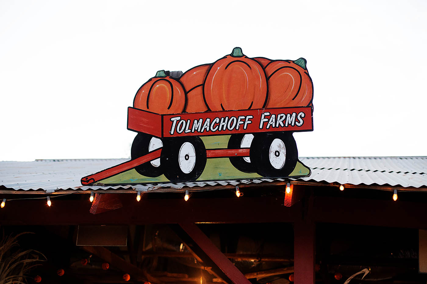Tolmachoff Farms in Glendale, AZ - annual corn maze and pumpkin patch