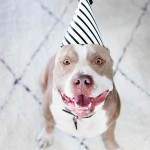 Chance (a rescued pitiful) celebrates his 2nd year home