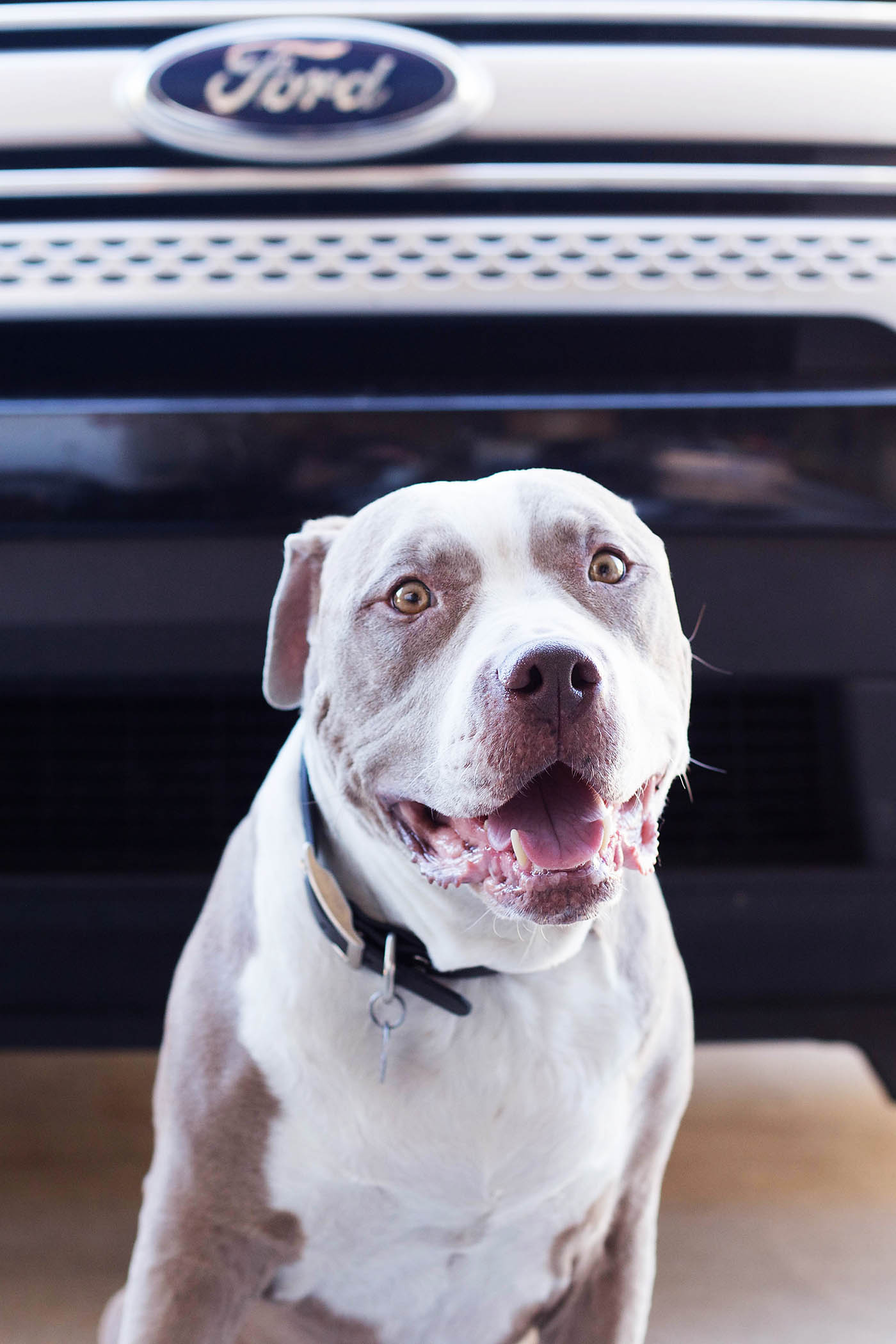 "Celebrate National Dog Day with Autotrader! They have some great tips on choosing a dog-friendly car and are even have a ""New Dog Smell"" air freshener"