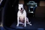 Why Dogs Are My Favorite Road Trip Companions